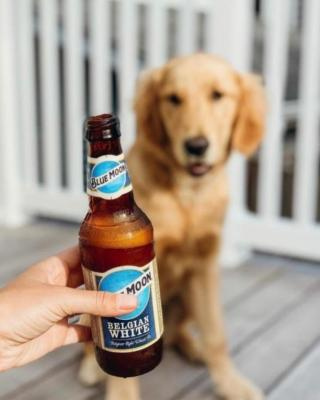 Cheers to the dog days of summer! Show us how you're enjoying Blue Moon for a chance to win a pair of signature glassware. To enter, tag us in your photos and add #BlueMoon & #Sweeps. 📸: @adventureswithmurph . . . NO PURCH. NEC. Open to legal US res of 50 US/DC, 21+ only. Begins 8/4/20 and ends 8/31/20. 4 entry periods. For Rules, visit www.promorules.com/PL013965. Void where prohibited. Msg&data rates may apply.