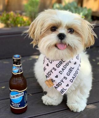 While you can't offer your pup a cold one, make sure you celebrate #InternationalDogDay.  . . . 📸: @kumi_tst